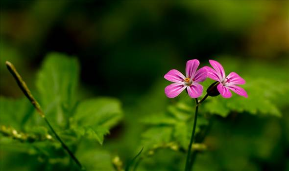Dainty pink flowers non matte.jpg by WPC-187