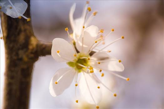 _MG_4521Blossom.jpg by WPC-187