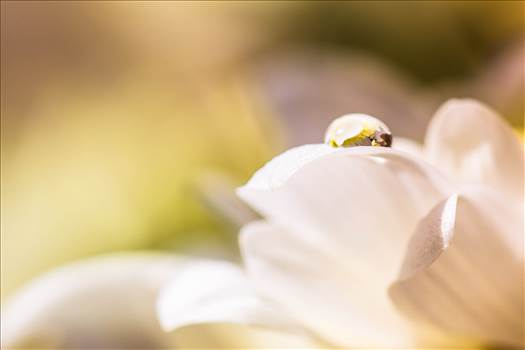 _MG_3838Yellow droplet.jpg - undefined