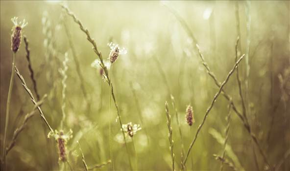 Grass on Downs.jpg by WPC-187