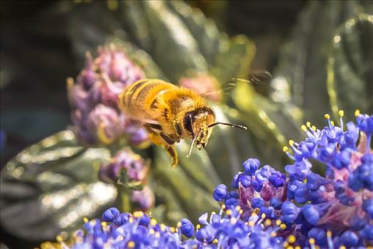 _MG_5035Bee animation.jpg - undefined