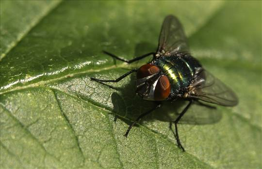 Greenbottle.jpg by WPC-187