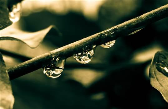 Droplets B & W.jpg by WPC-187