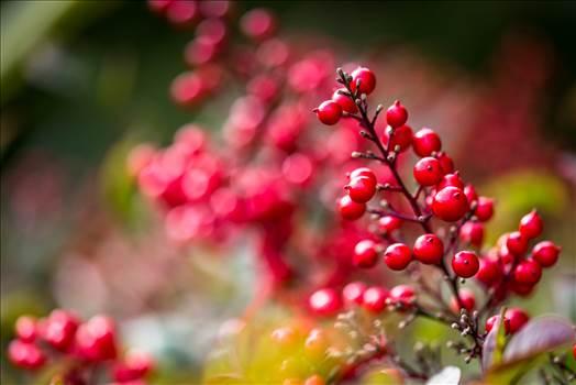 Berries-8572.jpg - undefined