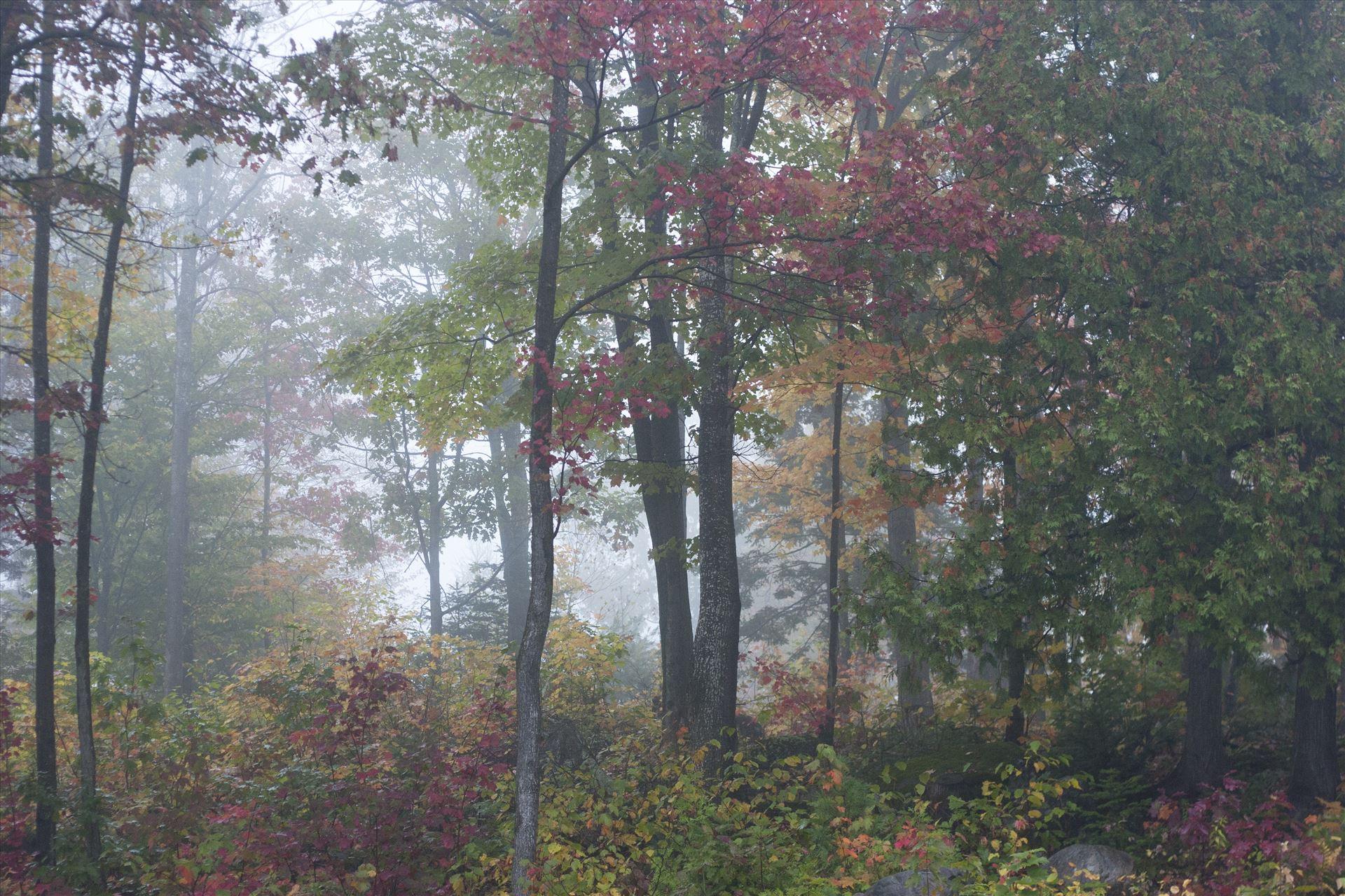 Foggy forest  by Inna Ricardo-Lax Photography