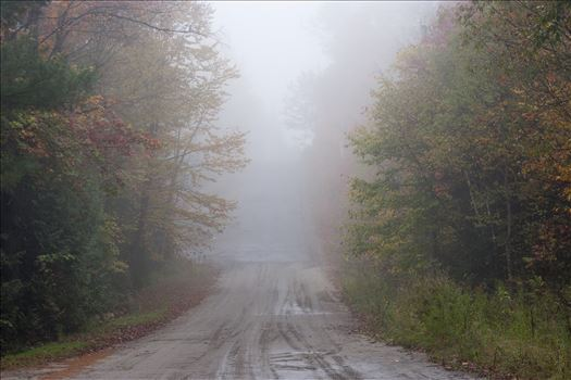 A foggy road by Inna Ricardo-Lax Photography