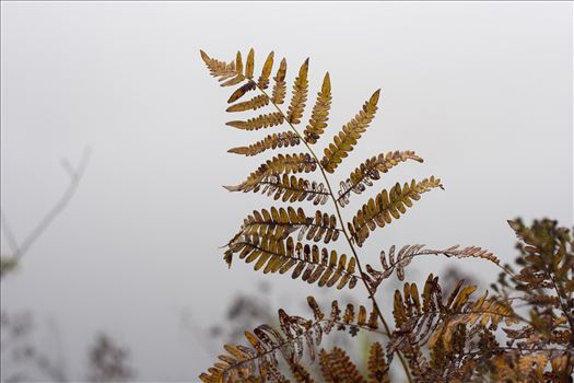 Foggy leaves by Inna Ricardo-Lax Photography