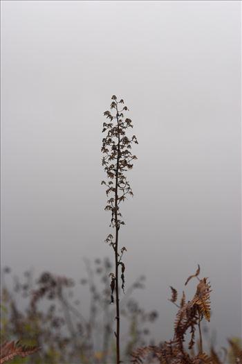 Foggy nature by Inna Ricardo-Lax Photography