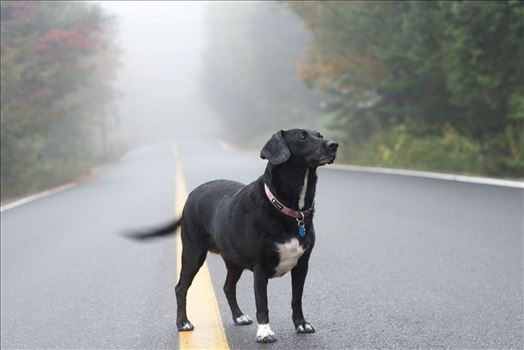 A dog in a fog by Inna Ricardo-Lax Photography