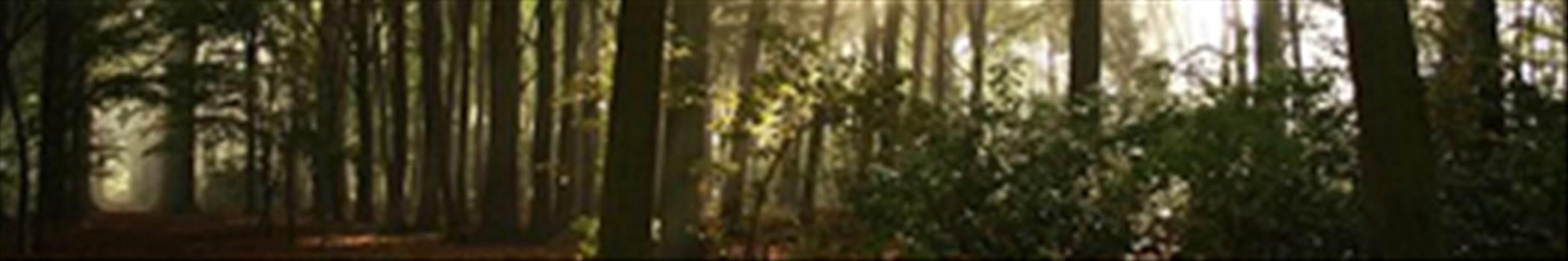 forest.jpg by shoresofelysium