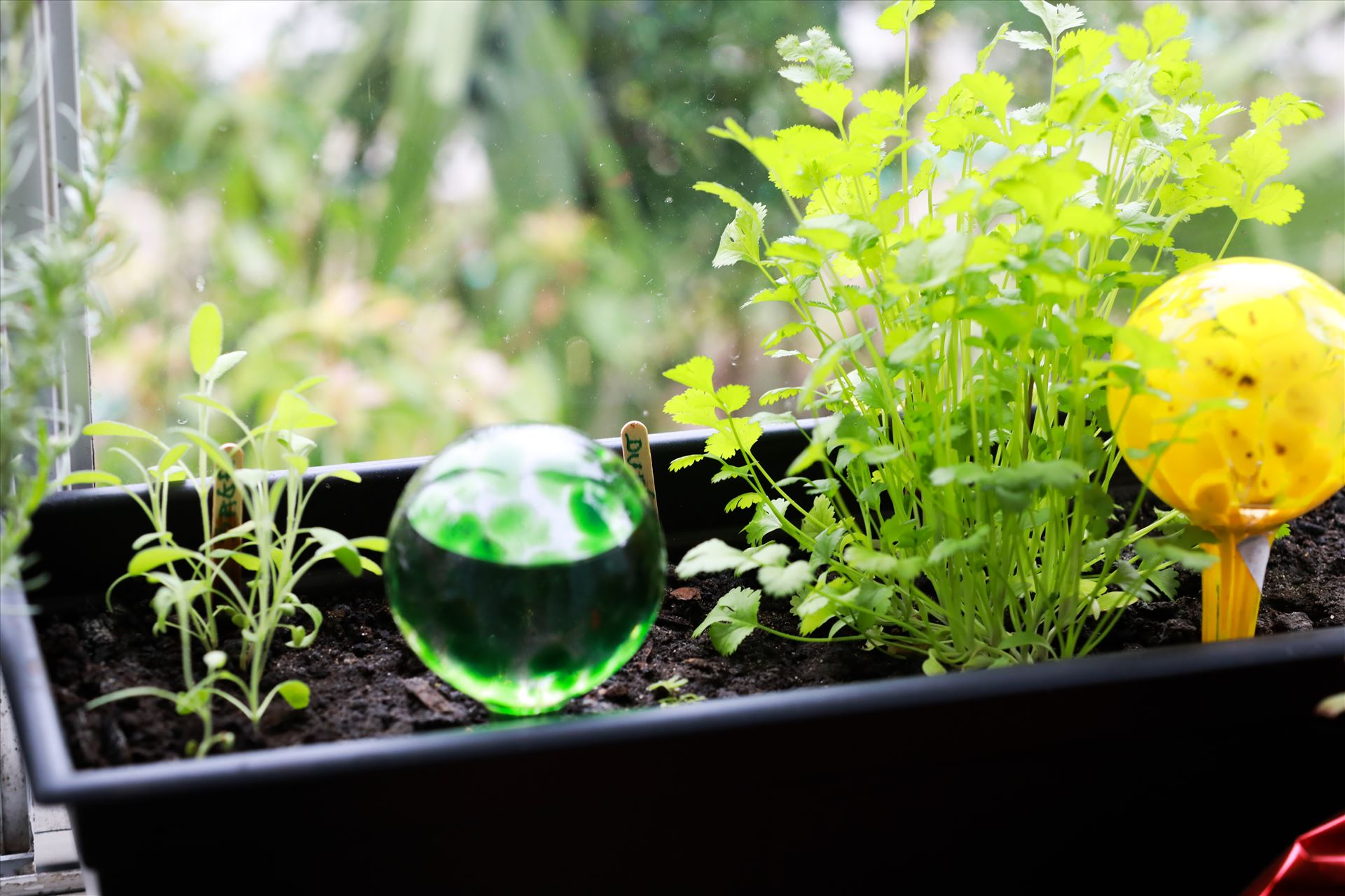 Around the Garden-4.jpg Glass bulb herb garden by Cat Cornish Photography