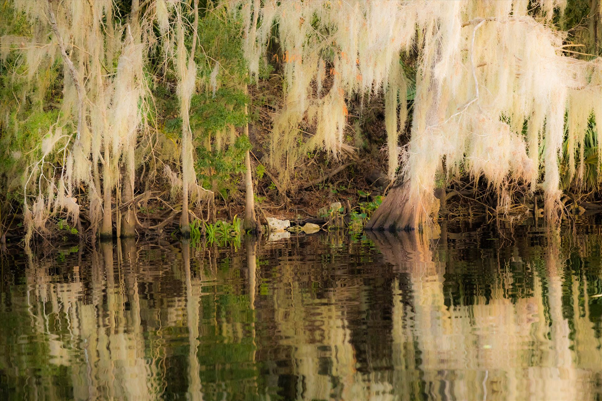 Reflections-2.jpg Water reflection in swamp of the St John's River, Florida by Cat Cornish Photography
