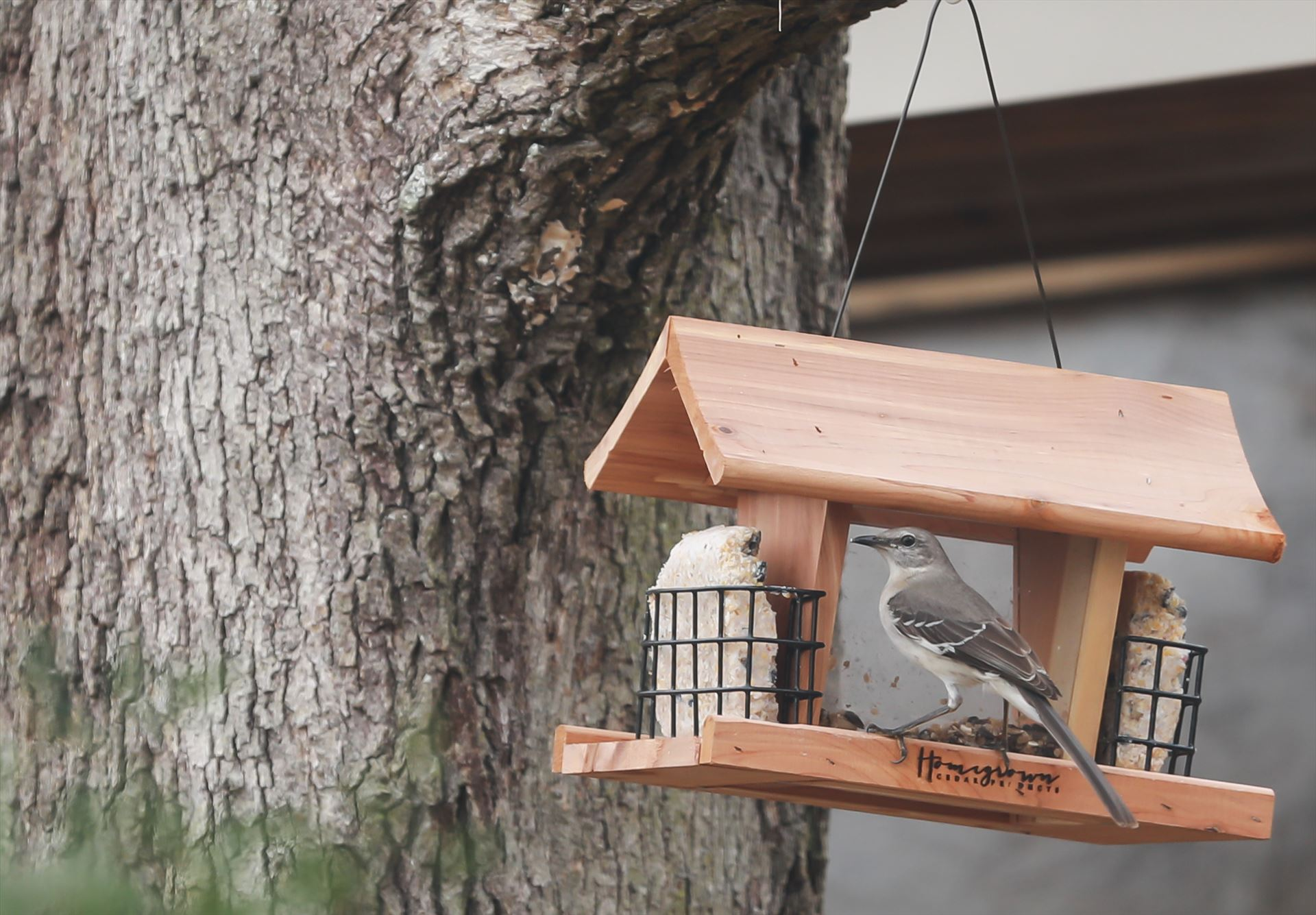 Around the Garden-1.jpg Bird on the bird feeder by Cat Cornish Photography
