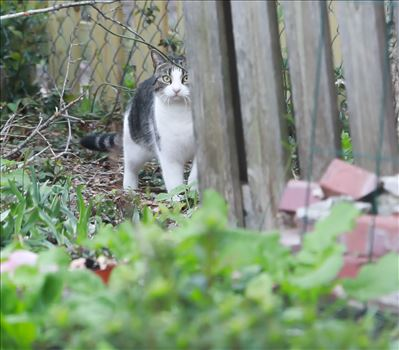 Around the Garden-3.jpg - El gato