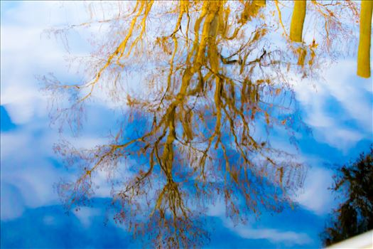 Reflections-4.jpg by Cat Cornish Photography