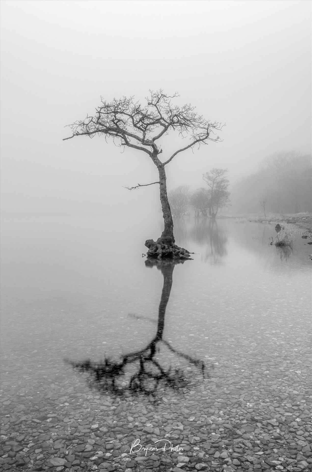 Misty Milarrochy Loch Lomond A black and white photograph of Loch Lomond taken at Milarrochy Bay. by Bryans Photos
