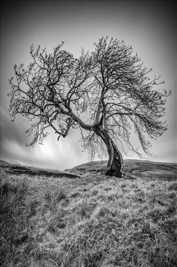 Frandy Tree by Bryans Photos
