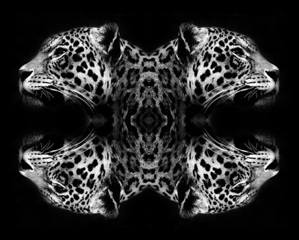 Jaguar Art Black & White by Bryans Photos