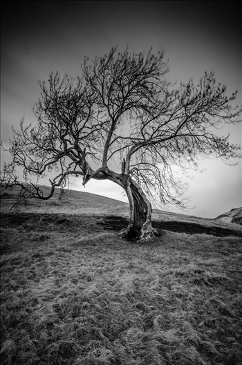 The Frandy Tree by Bryans Photos