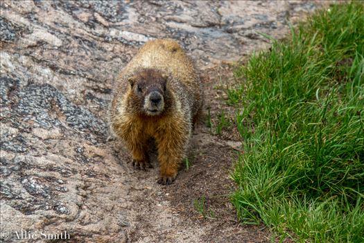 Bear Lake Trail -