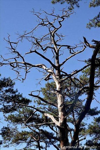 trees 4.jpg by Bingles