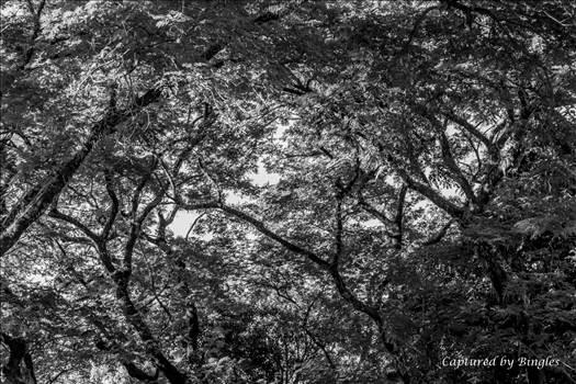 trees 2.jpg by Bingles