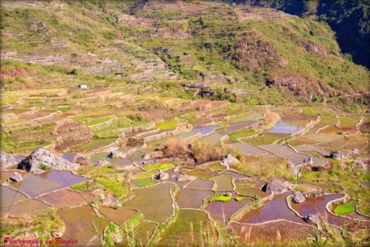 Sagada Rice Terraces by Bingles