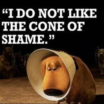 cone of shame.jpg -