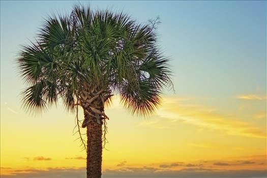 Palm Sunset.jpg by jennyellenphotography
