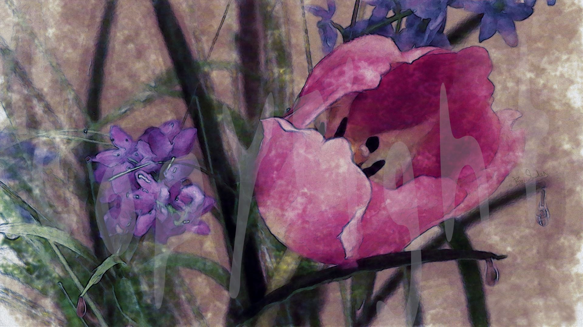 A Pale Pink Tulip 4681 A Pale Pink Tulip sways in the rain and wild grasses by Snookies Place of Wildlife and Nature