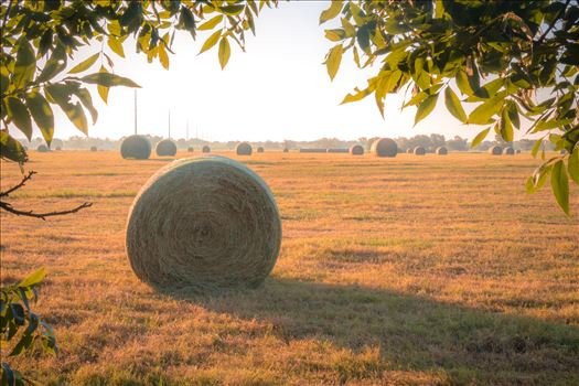 20170819_Hay Field_025.jpg by Charles Smith Photography