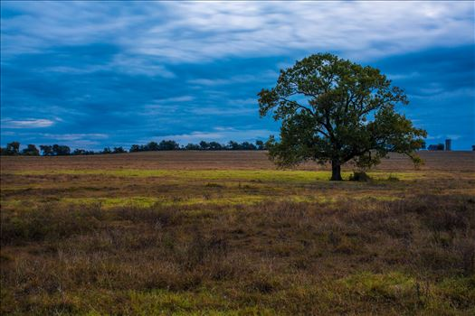 20171020_Tree_005.jpg by Charles Smith Photography