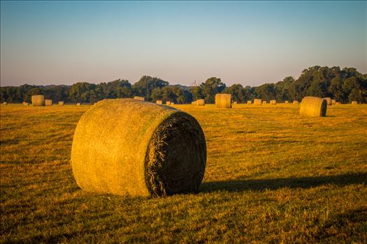 20170819_Hay Field_022.jpg by Charles Smith Photography