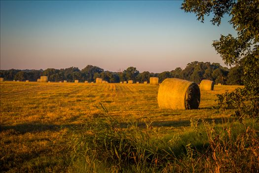 20170819_Hay Field_019.jpg by Charles Smith Photography