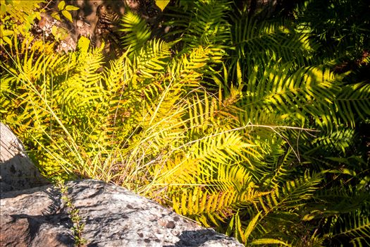 Plantlife of Miller Springs by Charles Smith Photography
