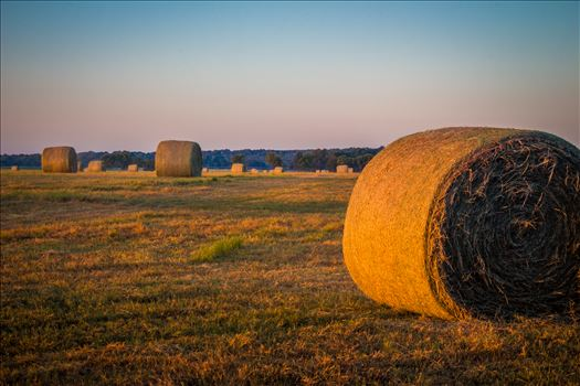 20170819_Hay Field_012.jpg by Charles Smith Photography