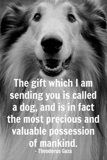 05553fa4405f405f2e1d62efe0da041d--best-gifts-pet-quotes.jpg by DianneD1