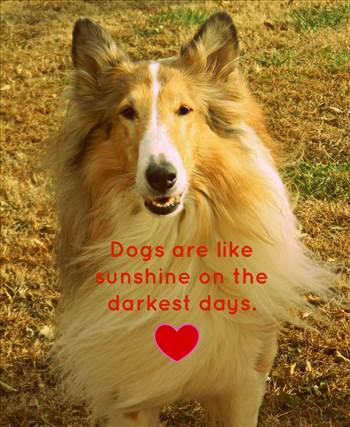 d53cfdceb4c795f54655008c2b42d489--funny-picture-quotes-rough-collie.jpg by DianneD1
