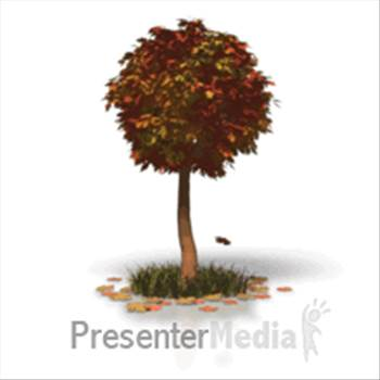 fall_tree_leaves_md_wm.gif by DianneD1