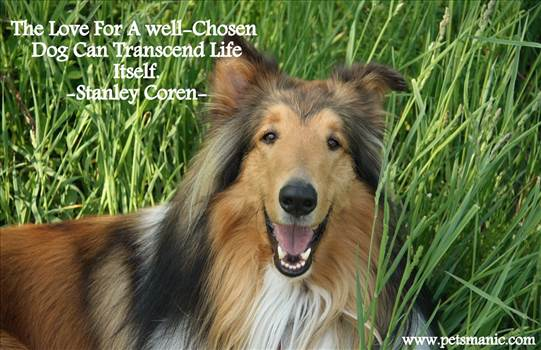 4051018-border-collie-dog-quotes.jpg by DianneD1