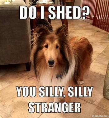 eb235d4a45a73e8935d1e9415dc96e0e--dog-sayings-border-collies.jpg by DianneD1