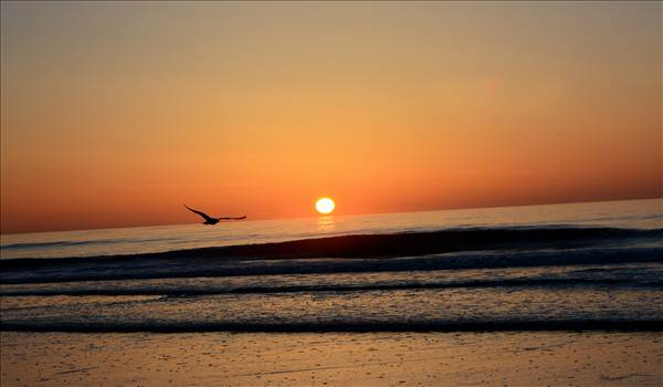 Sunrise seagull.jpg by WPC-372