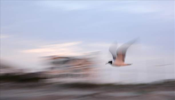 Bird in flight.jpg by WPC-372