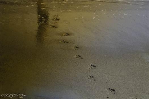 footprints (1 of 1).jpg by 853012158068080