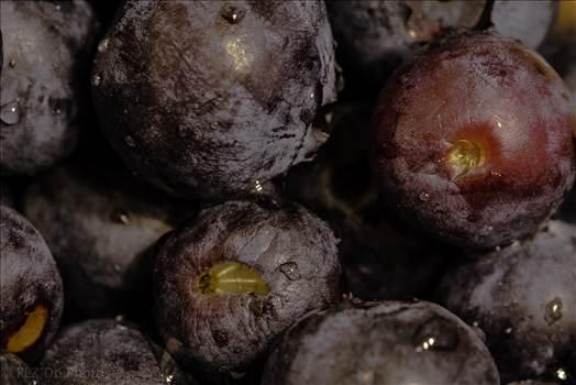 Tasty blueberries.jpg by 853012158068080