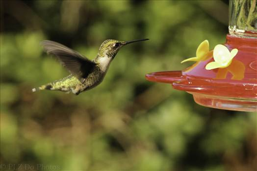 Hummingbirds-7991.jpg by 853012158068080