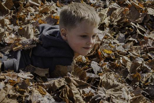frolic in the leaves.jpg by 853012158068080
