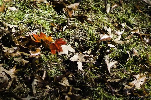 Falling Orange.jpg by 853012158068080