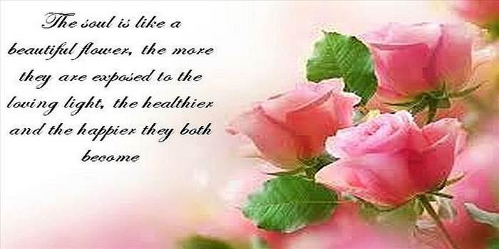 pink rose.jpg by Mediumystics