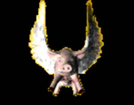 PIGFLY.gif -